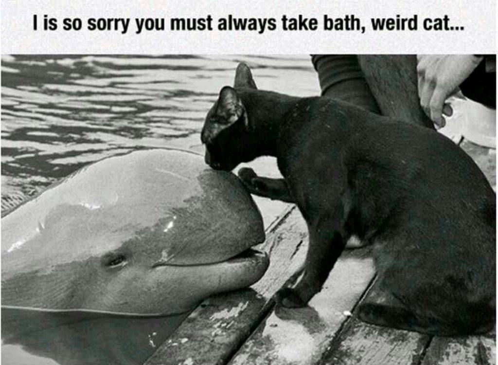 Weird cat memes