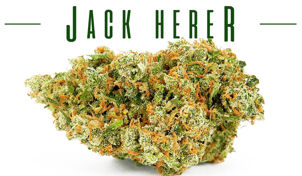 Jack Herer Branded Cannabis