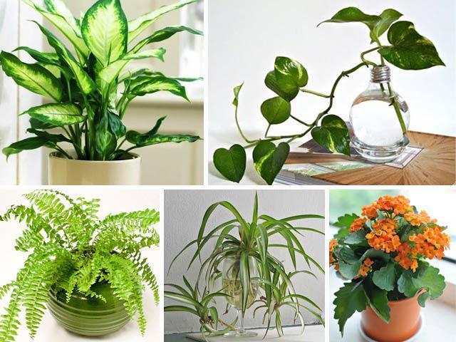 Những loại cây để trên bàn làm việc giúp thanh lọc không khí