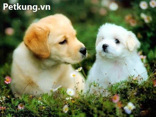 chữa bệnh chó bị nôn