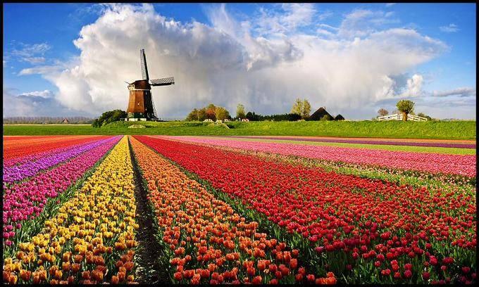 Образование в Нидерландах.jpg