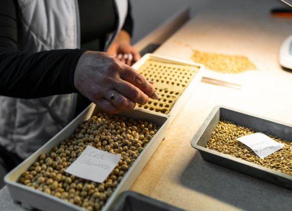 В лаборатории семенного завода Semelita