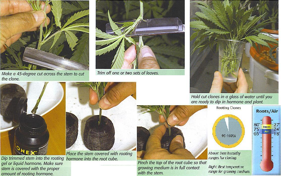 step by step to make clones