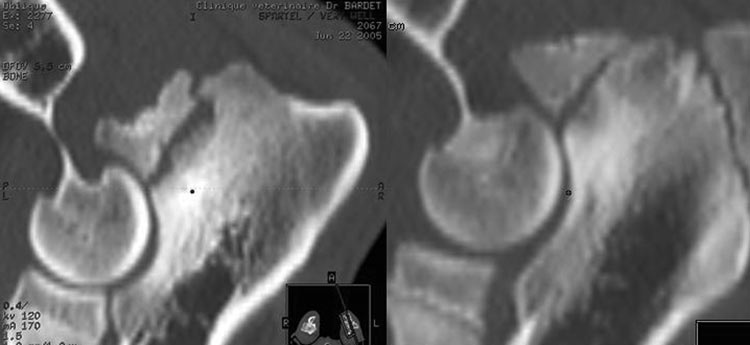LCT scan of two dogs affected by UAP