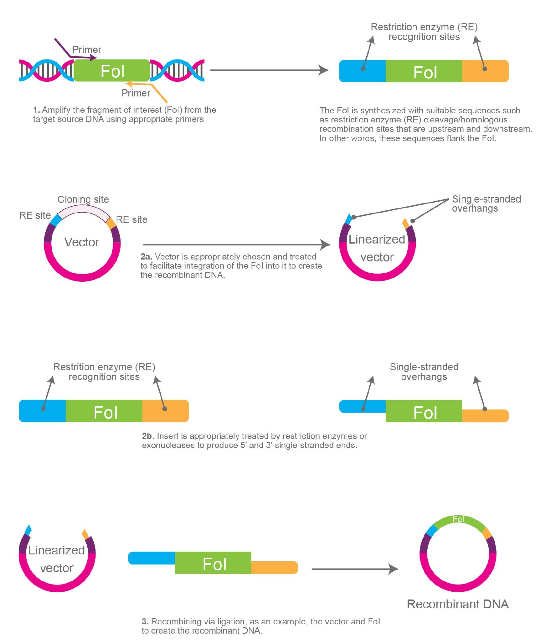 Illustrative overview of molecular cloning