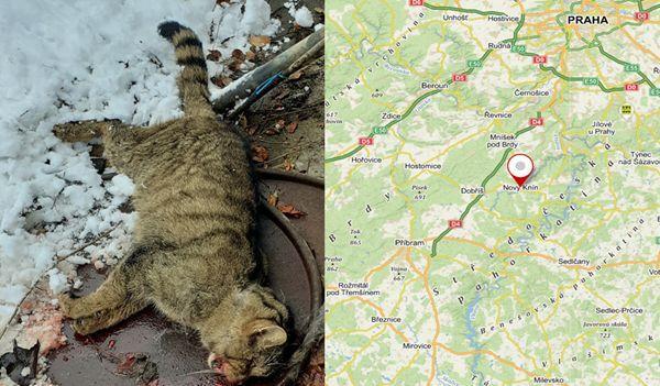 Obsah obrázku savci, kočkaPopis byl vytvořen automaticky
