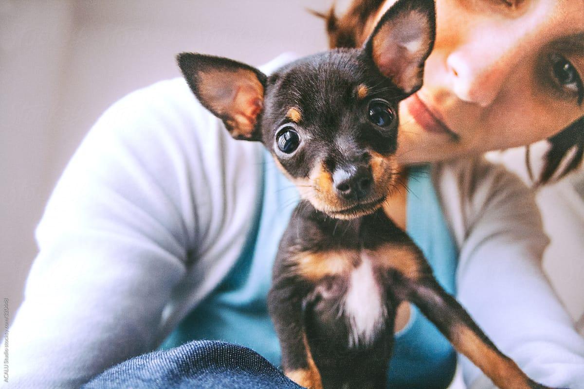Prague Ratter Puppie by ACALU Studio