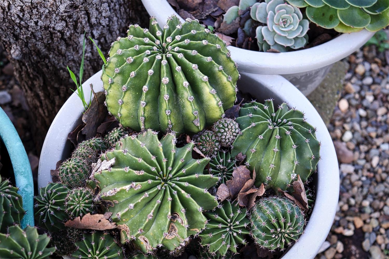 U V Cactus Bunch 2.jpg
