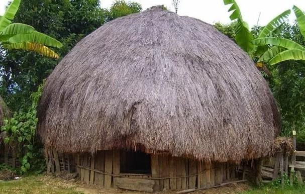 6 Rumah Adat Papua Gambarnya Ada Rumah Kaki Seribu