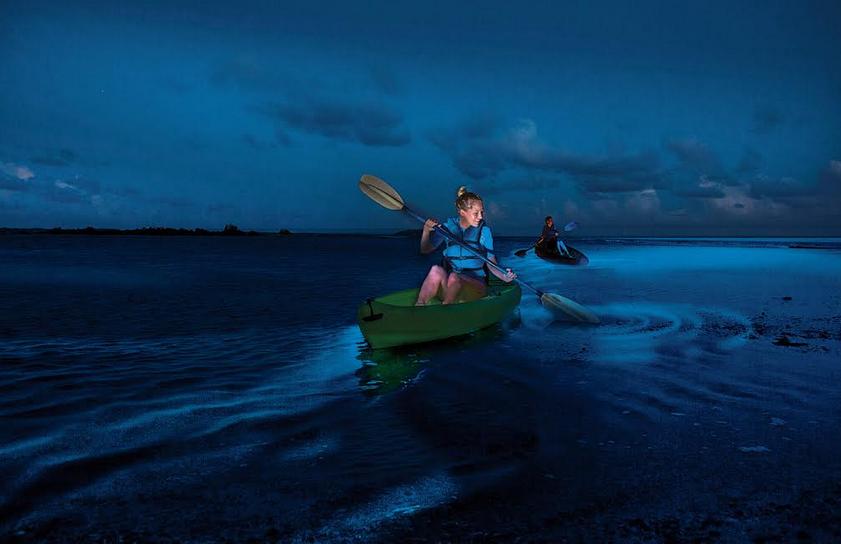 Puerto Mosquito Bioluminescent Bay