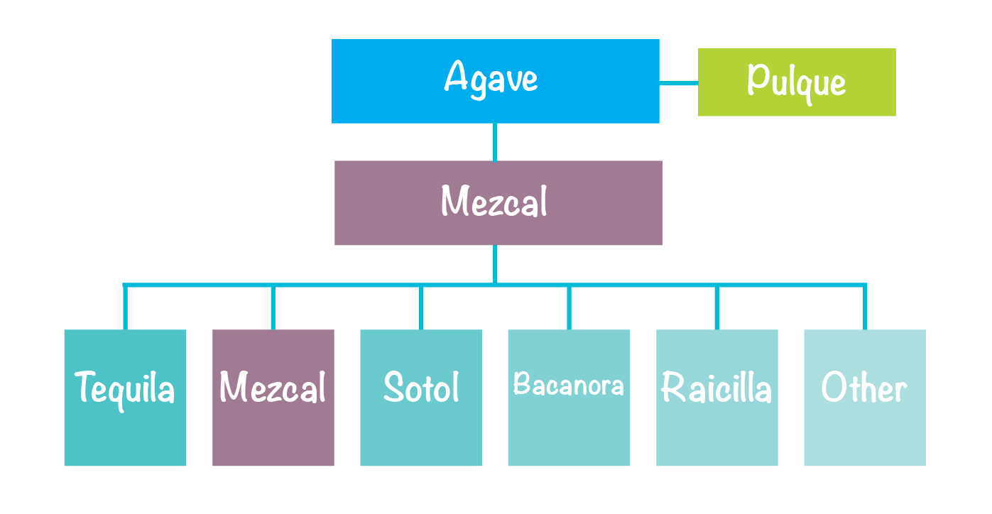 Agave_Family_Tree_d01.png