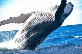 Image result for majestic whale