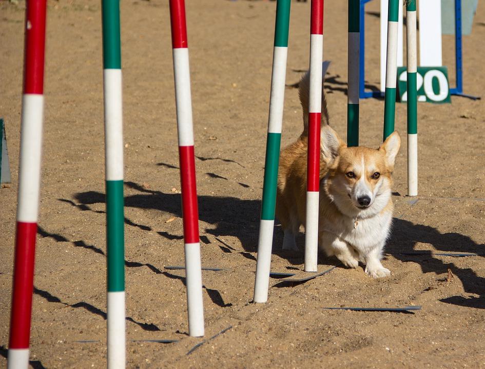 dog agility training weave poles