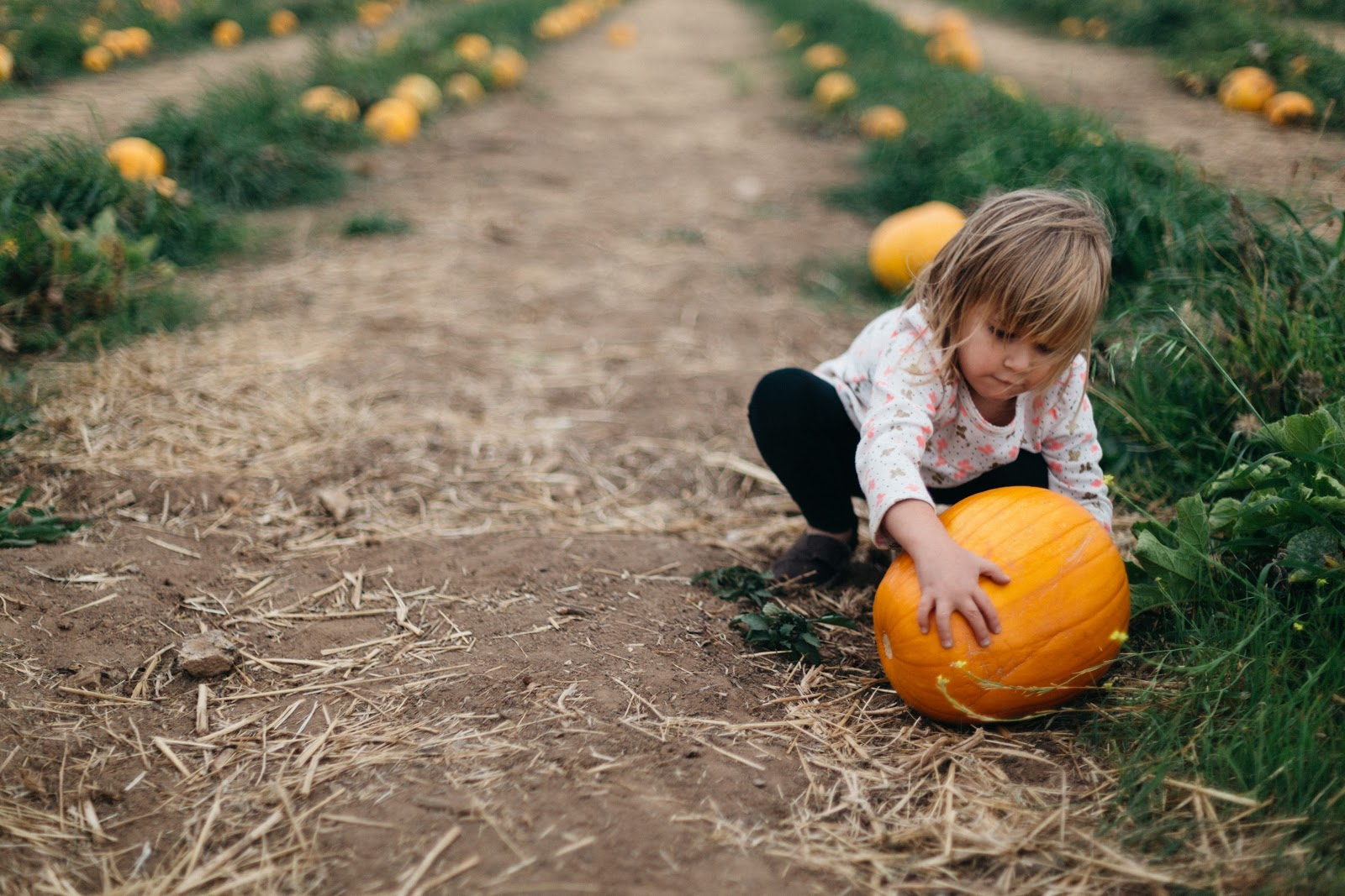 Child at a pumpkin patch