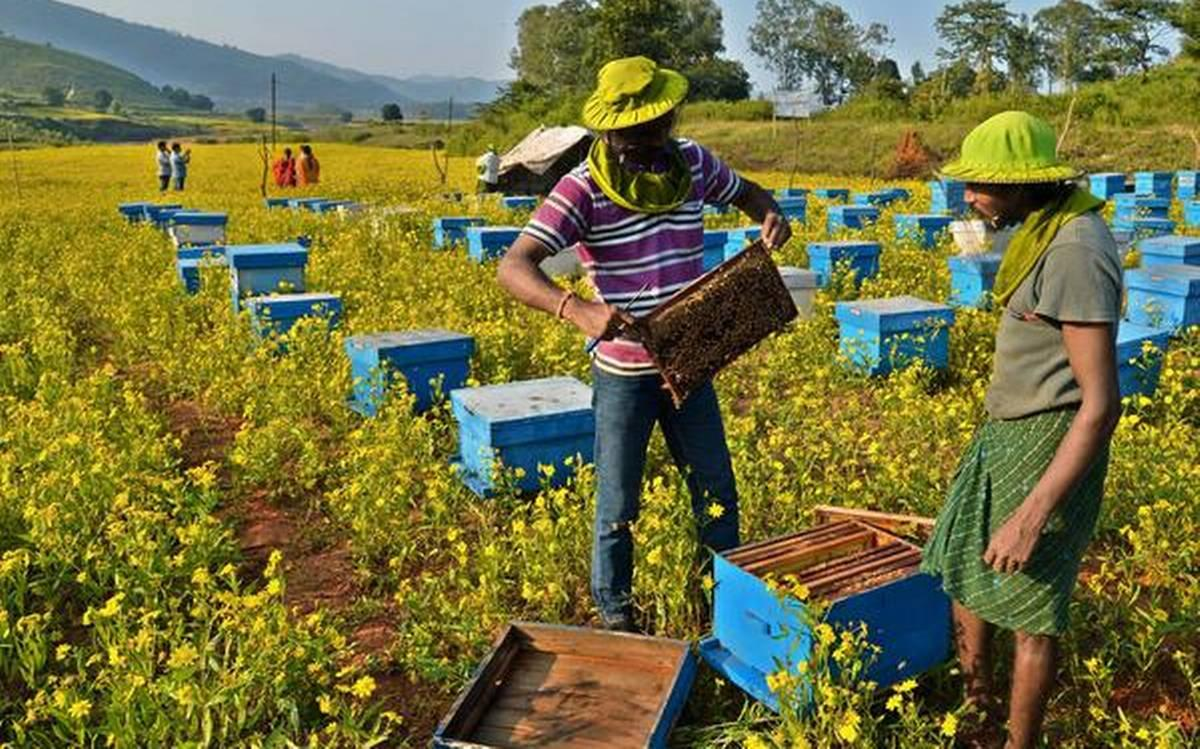 The truth about honey - The Hindu