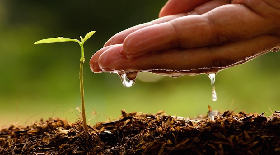 Funding is like planting a seed— Beginner's Guide to Funding a Startup.