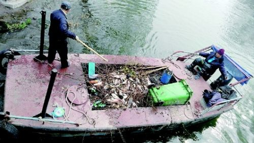 Lake staff recover dead fish from Daming Lake. (via Qilu Evening News)