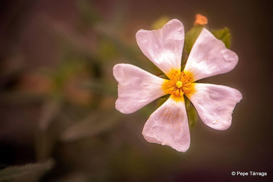 La imagen puede contener: flor, planta y naturaleza