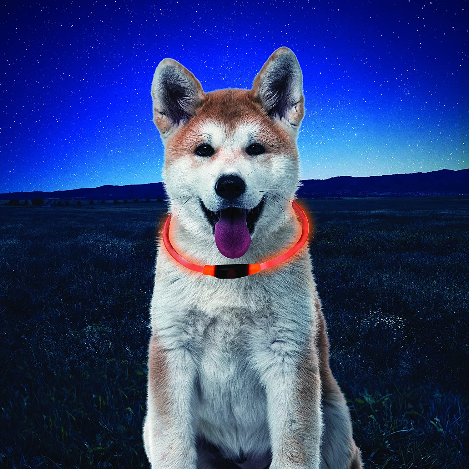 Dog wearing LED necklace in front of a night sky