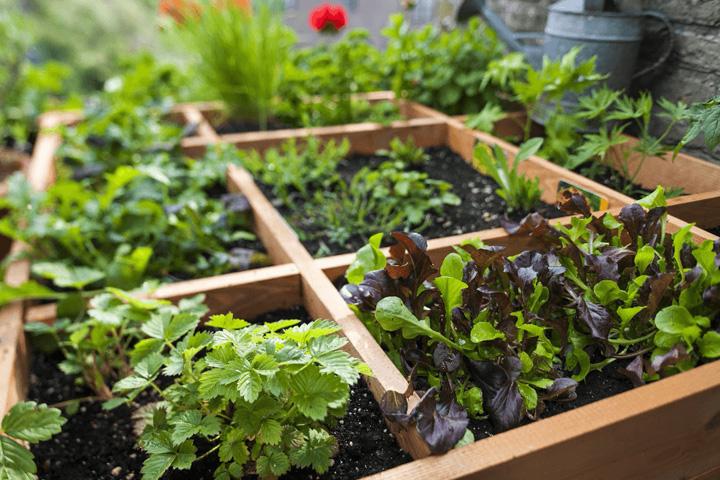 Sân thượng là nơi trồng rau xanh lý tưởng