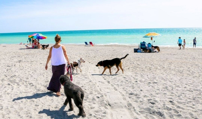 Brohard Paw Park near Venice Beach in Florida