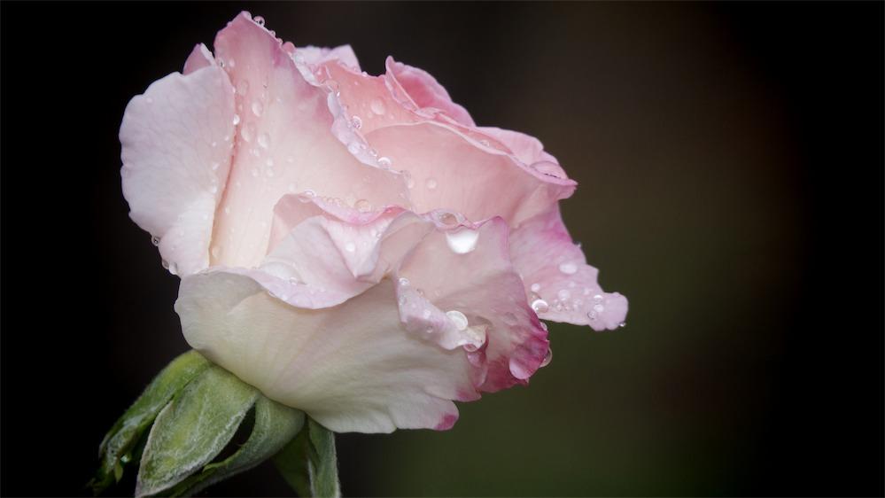 Big Wet Pink.jpg
