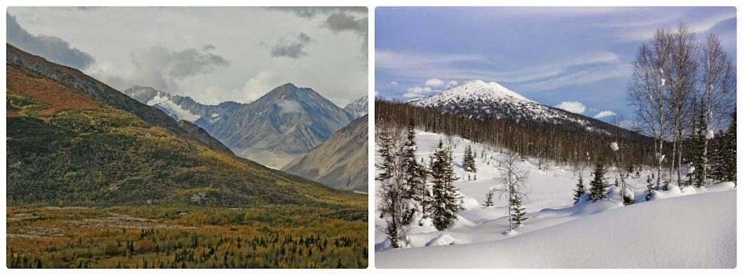 Bosques boreales de Alaska y Siberia