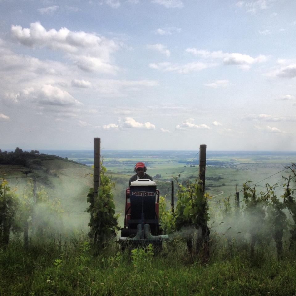 Vigneron en train de traiter au chenillard en coteaux, vue donnant sur la plaine Alsacienne.