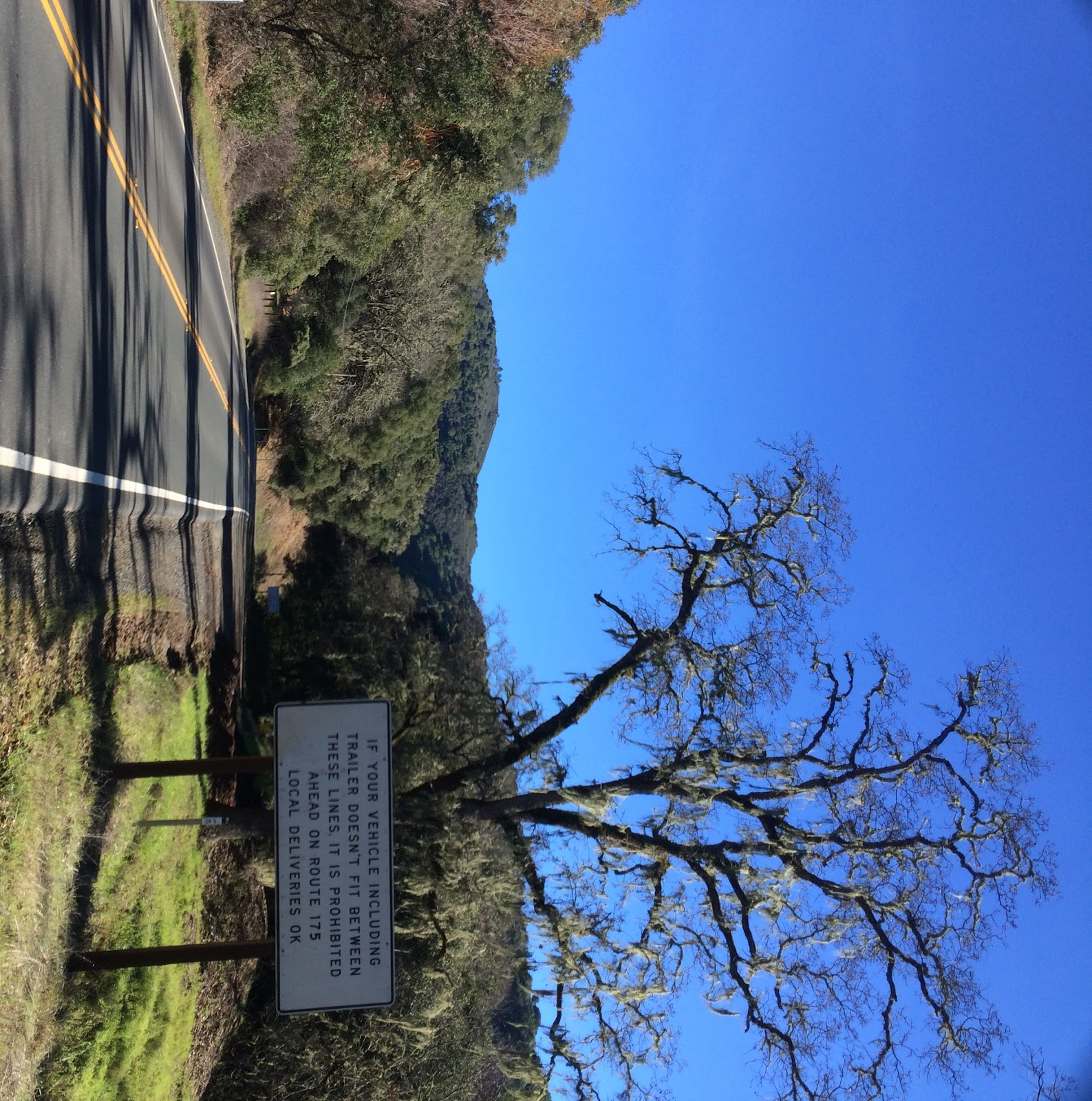 Cycling the Hopland Grade - oak tree and sign