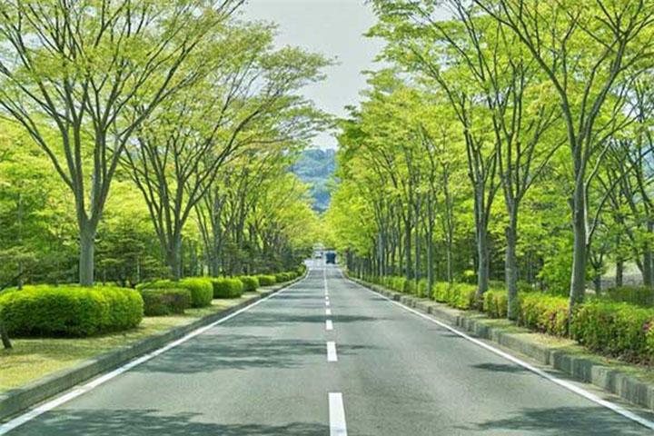 Sử dụng cây xanh giúp làm đẹp thêm cho không gian kiến trúc